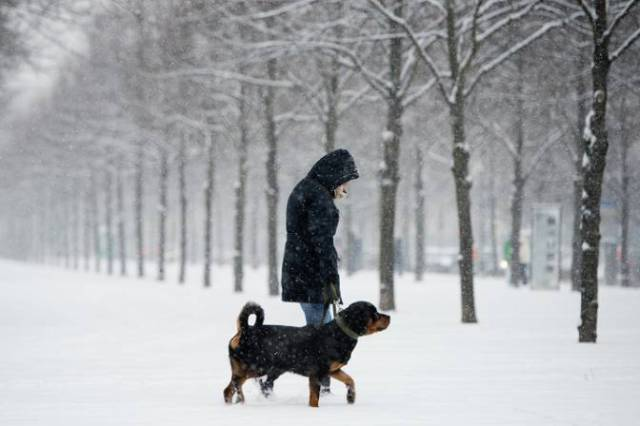 dog-walking-in-snow