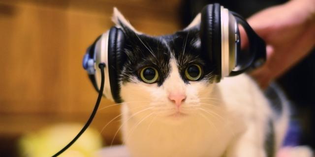 musicforcats