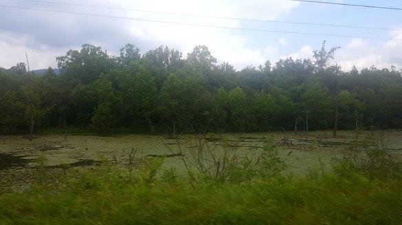 swamp6