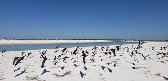 anclotekeybirds2